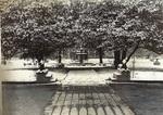 Snowy Campus (circa 1914)